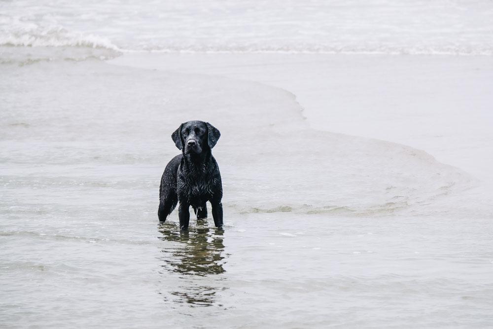 Labrador Summer in der Nordsee