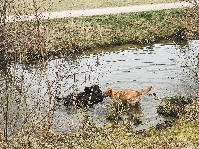 Alle ins Wasser