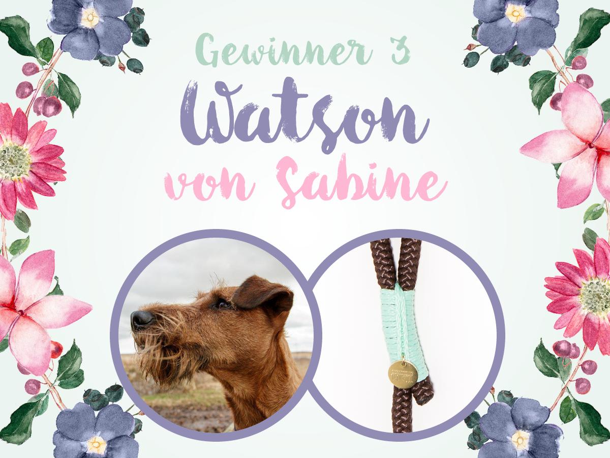 Watson (Irish Terrier) gewinnt braun.mint