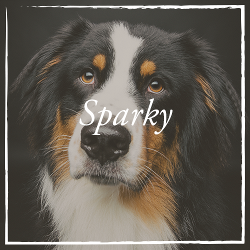 Sparky.png