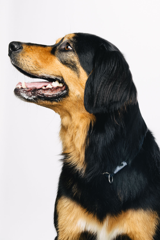 Pfotentick Hundefotografie Smilla mit TauStil