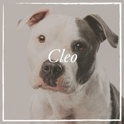 Cleo.png