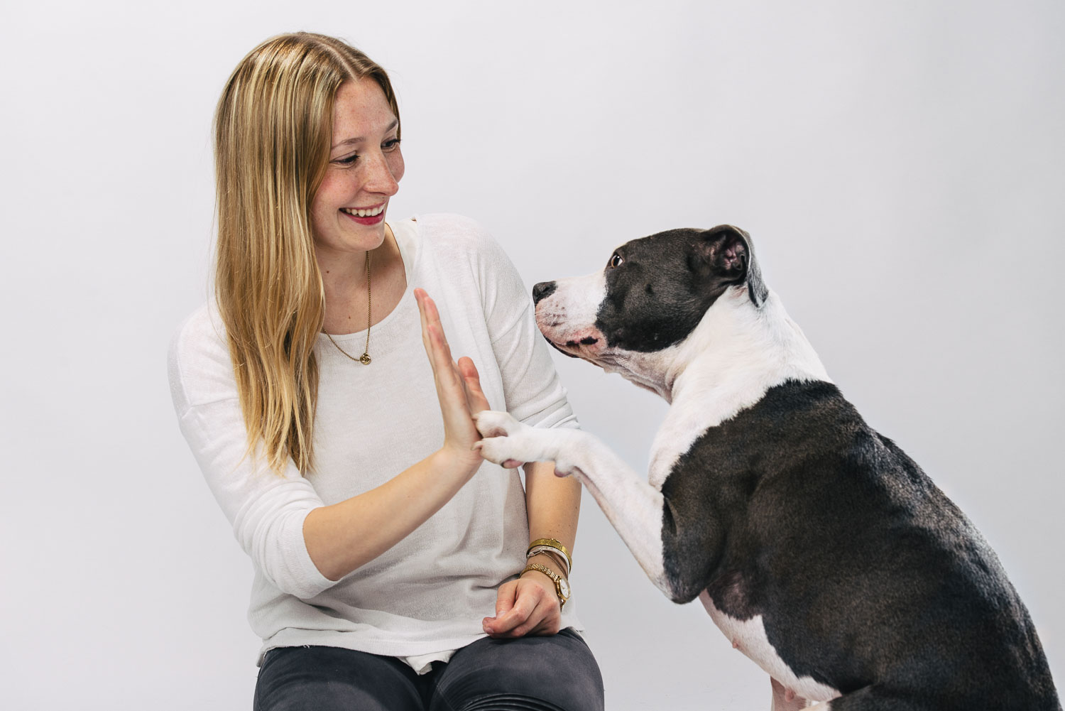 Fotoshooting American Staffordshire Terrier Cleo