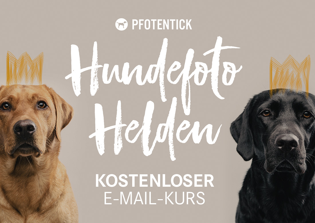 hundefoto-helden-scrollbox.jpg