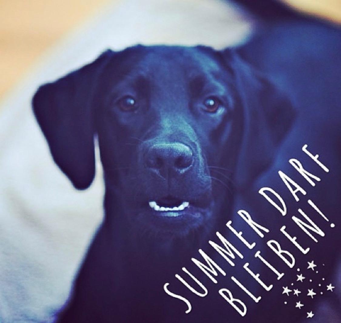 Summer darf bleiben