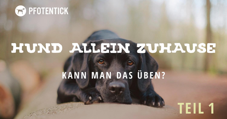 hund-alleinbleiben-ueben(1).jpg
