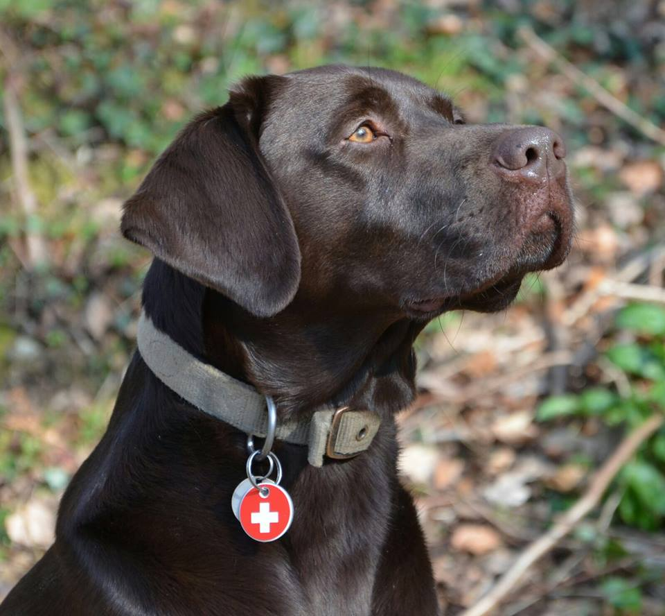 Proud Jake with his new tag