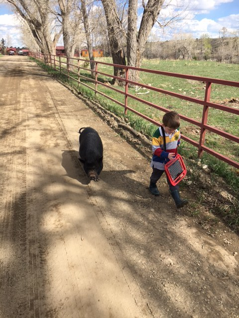Nathaniel walking to the creek near the barns with his sister-in-law's pet pig.