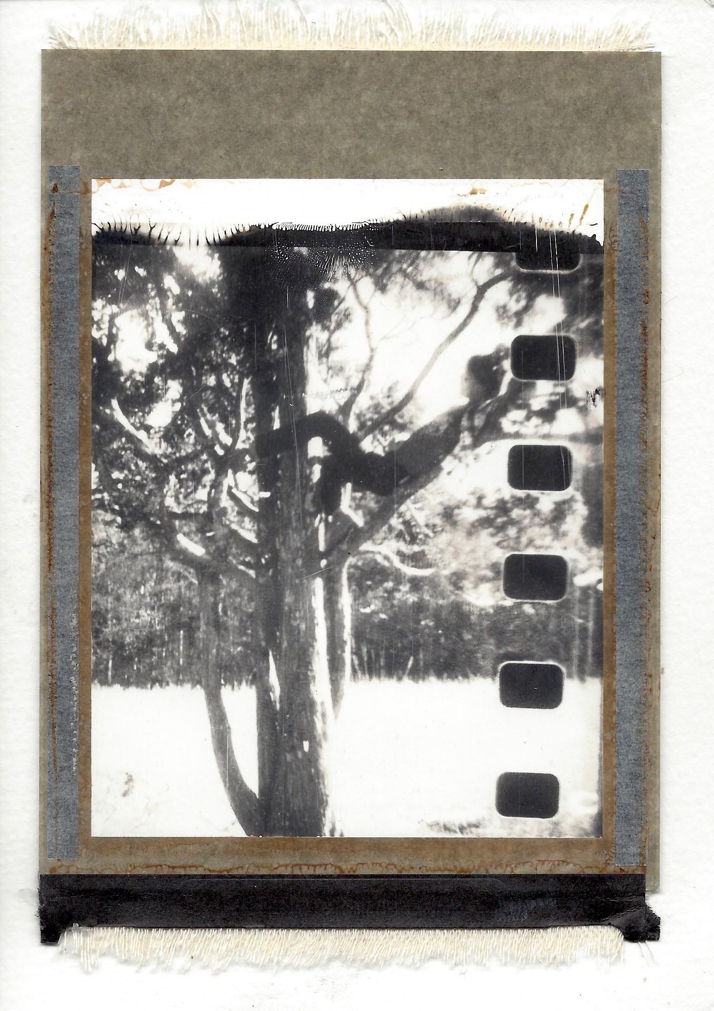 55 Polaroid Film