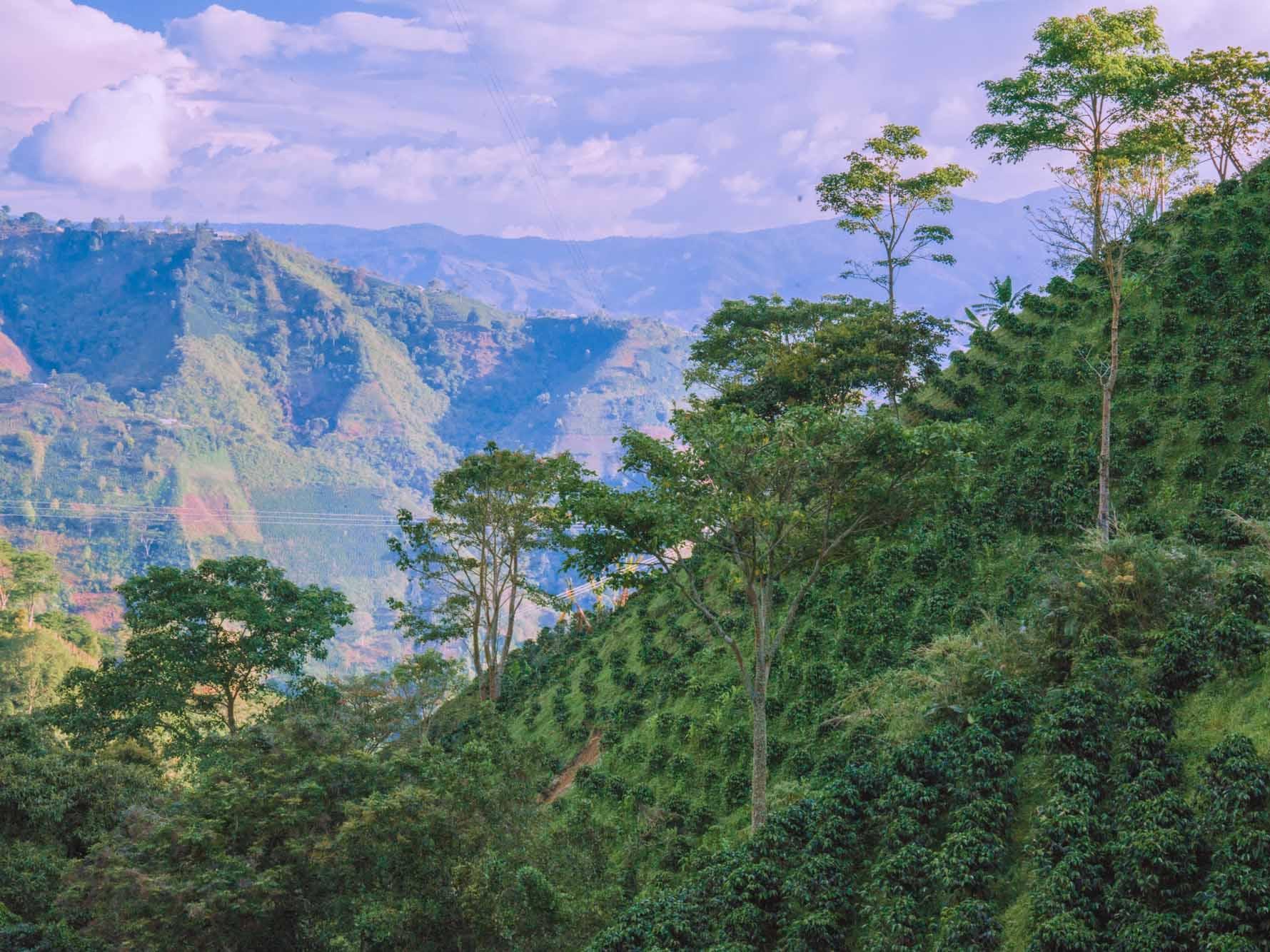 Coffee on Hillside Huila, Colombia