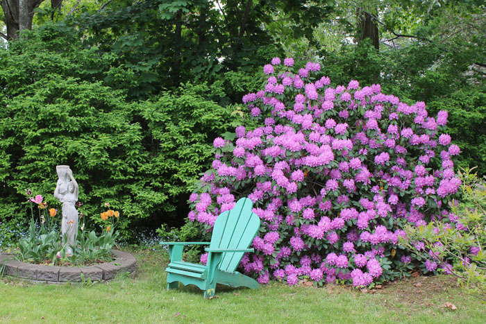 "One of many rhododendrons and ""Lily"" (so named by Ben, we have no idea why!). I was thrilled that we actually had tulips this year, I am sorry I didn't get a picture of them at their peak. There a a few deer that roam through town snacking on all the tulips but they missed us this year."