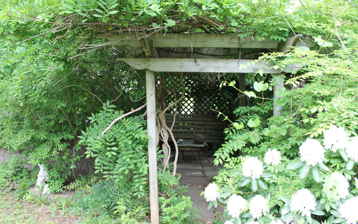 Our secret garden room, laden with grapes and wisteria (that hasn't bloomed since we have been here) but if this year is like last we will have a great supply of grapes. There are more garden pictures on my Flickr page, link to the left in the sidebar.