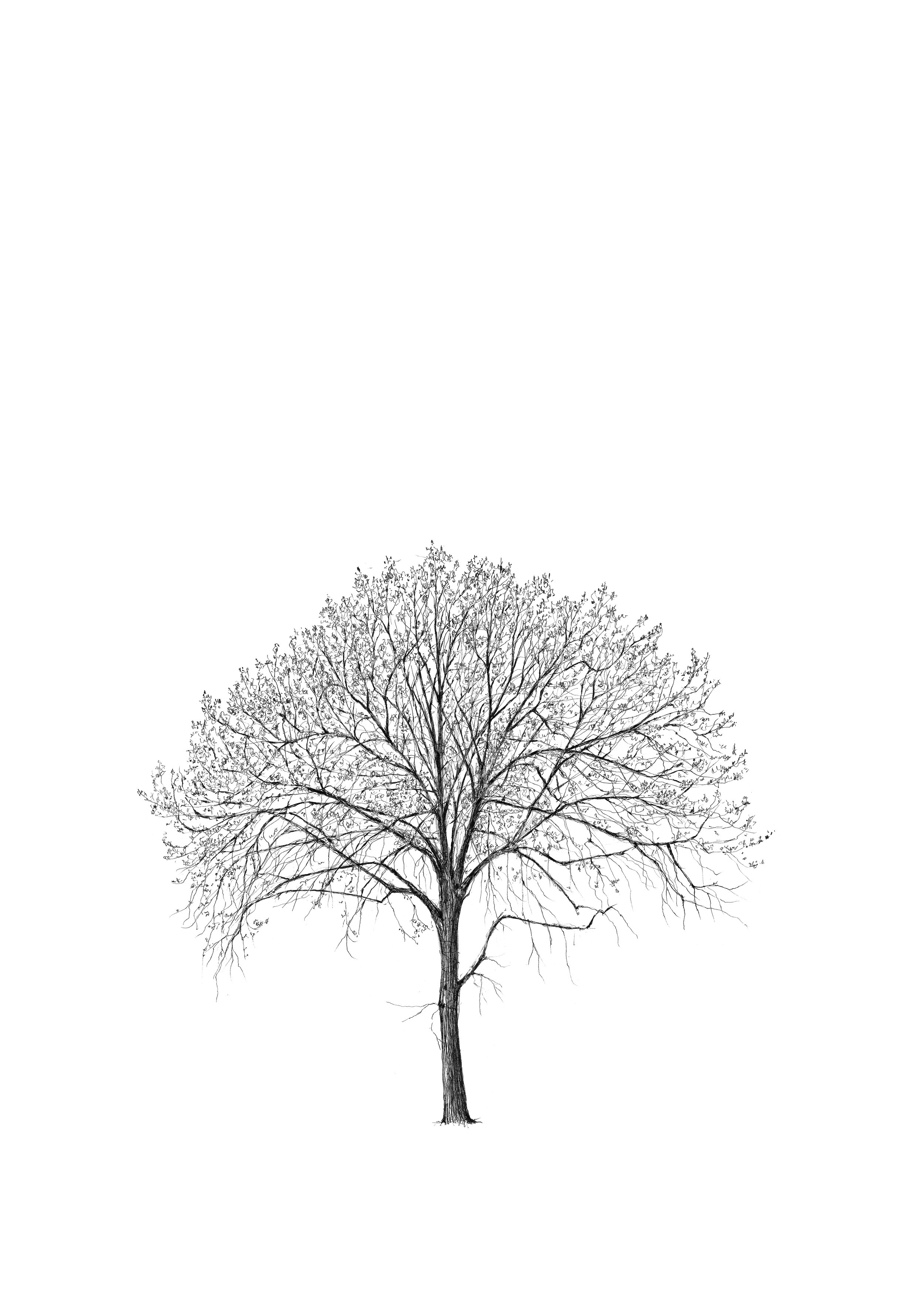 MARYLEBONE ELM TREE - LUKE ADAM HAWKER -LOW RES.jpg