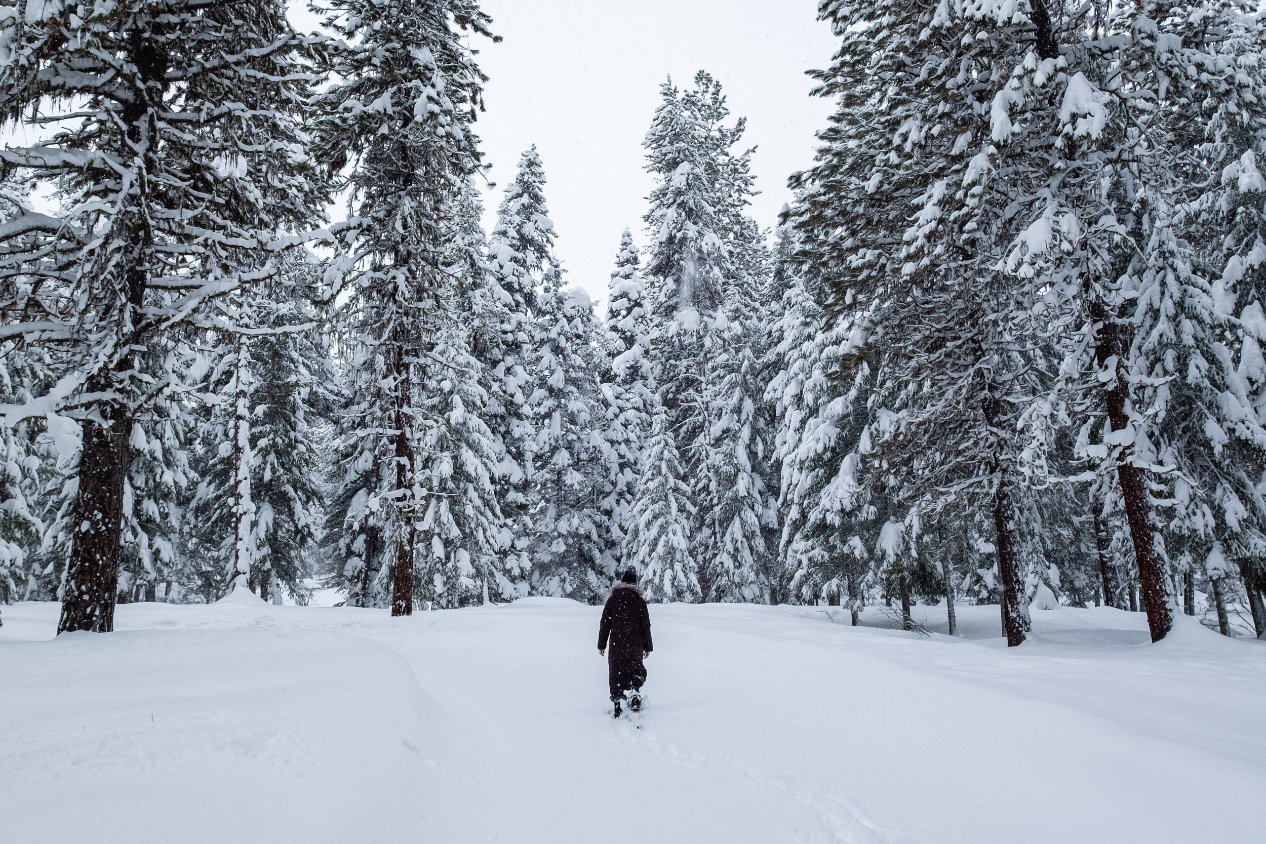 Exploring Ponderosa State Park by snowshoe