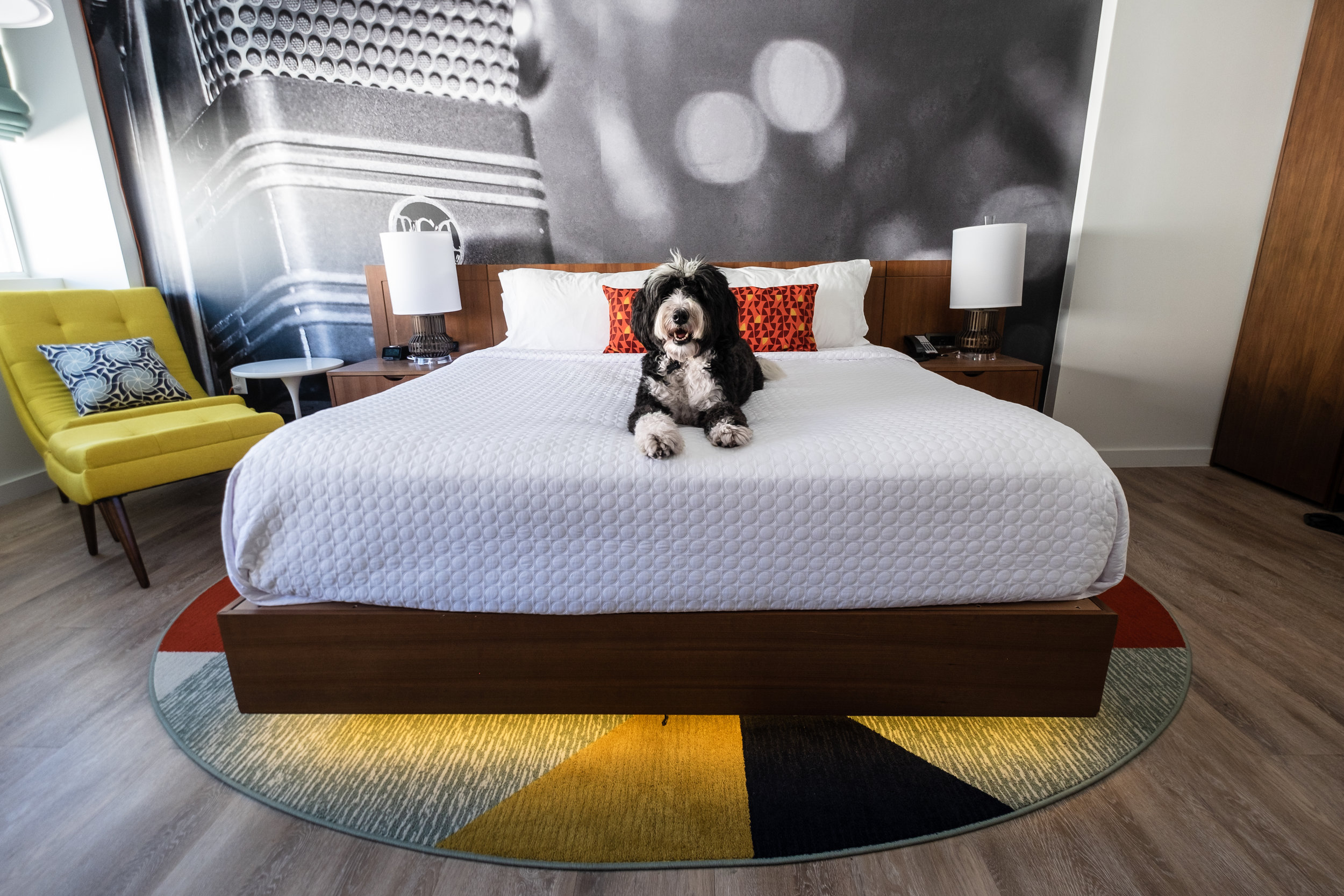 Sally living her best life at the Hotel Indigo Downtown