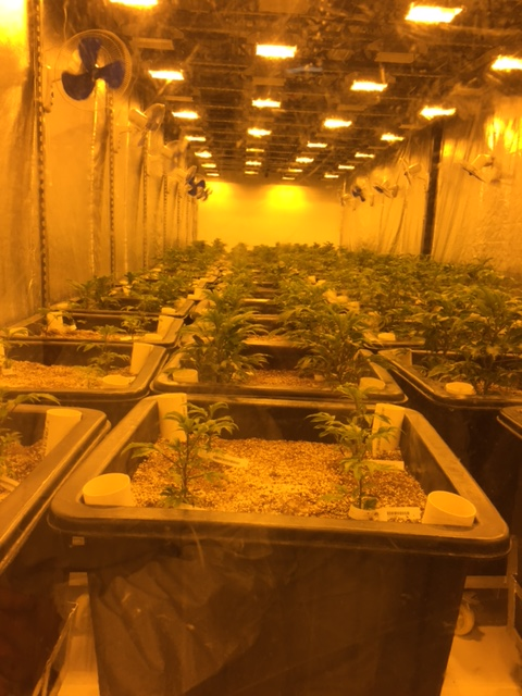 One of the grow rooms in the early stages