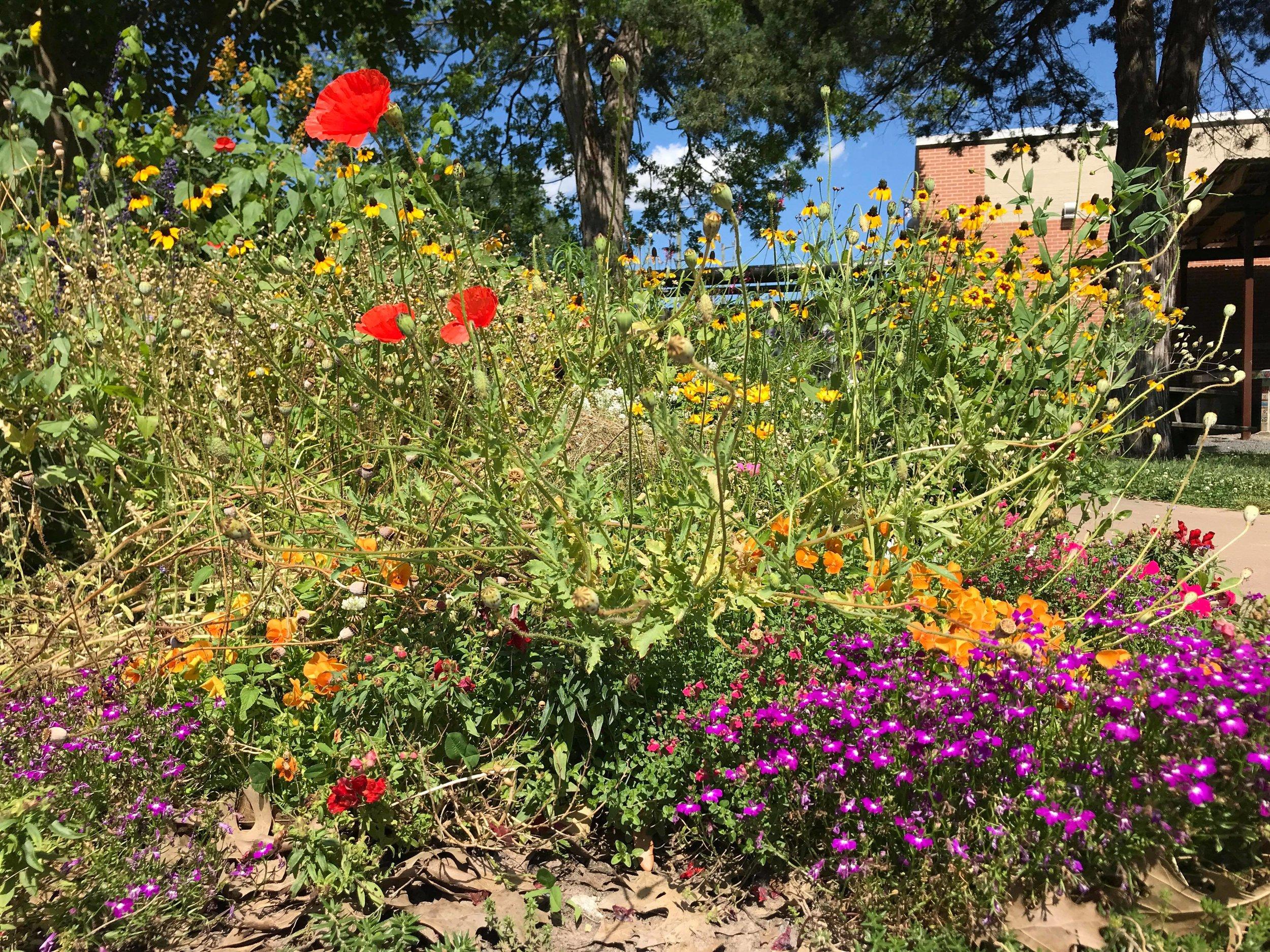 Travis Elementary Garden-05.jpg