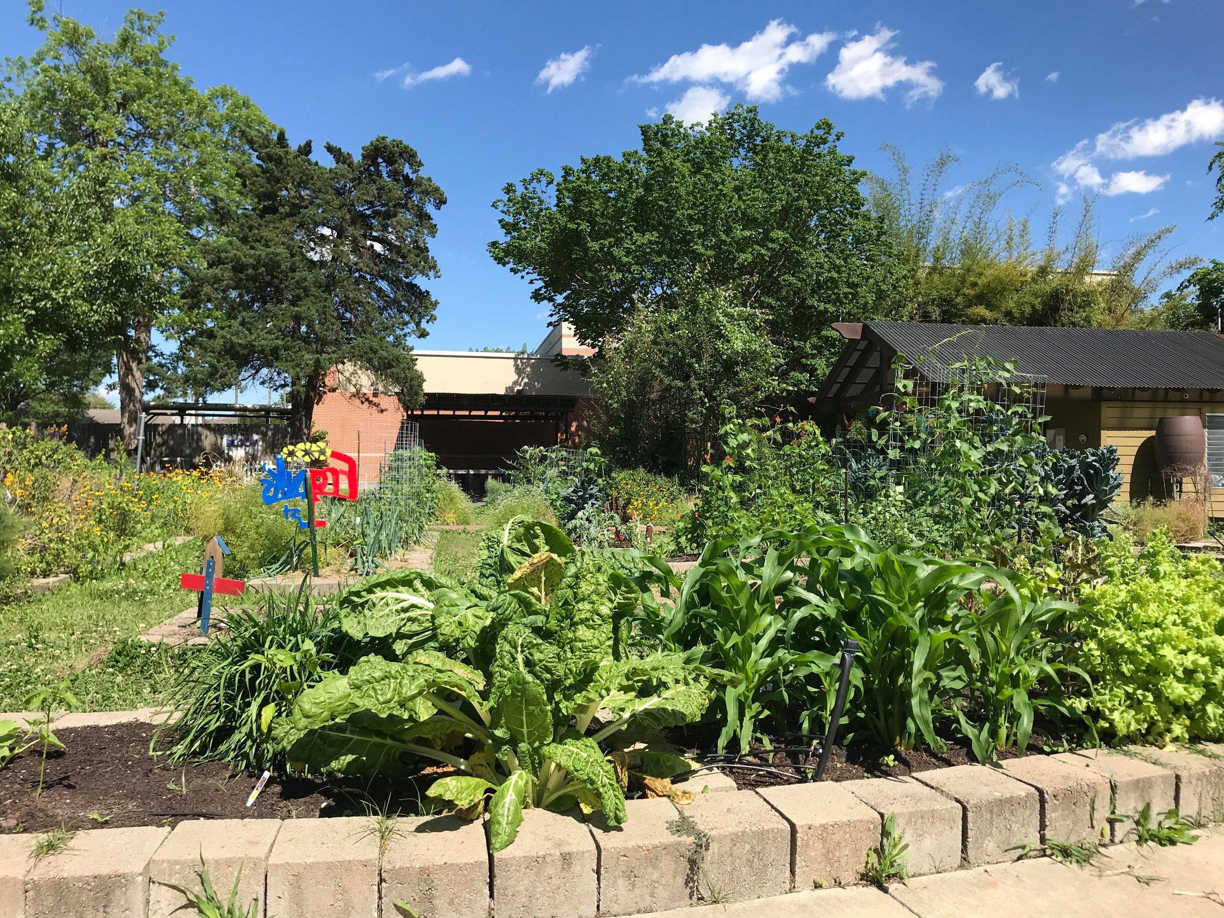 Travis Elementary Garden-07.jpg