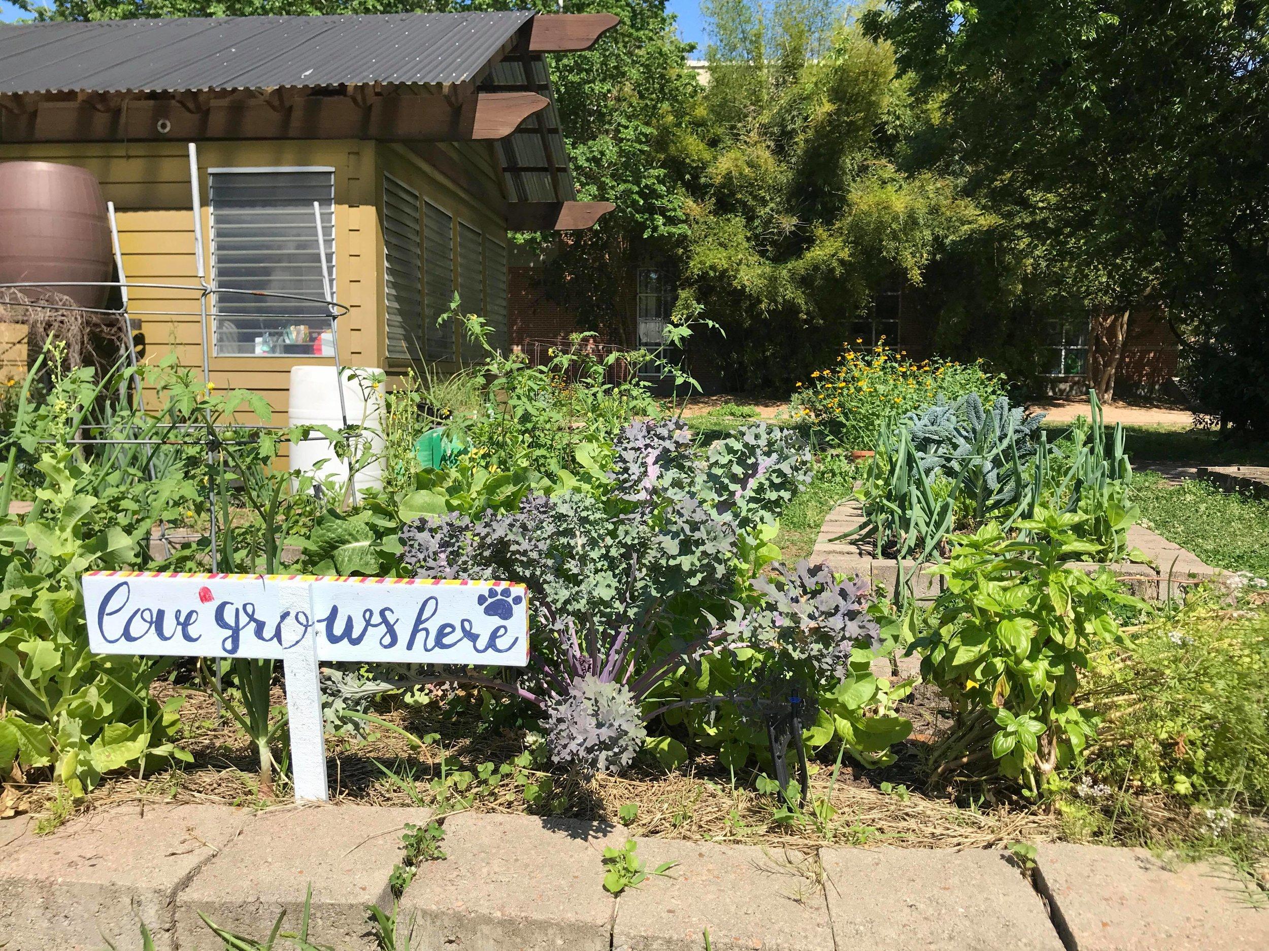 Travis Elementary Garden-09.jpg