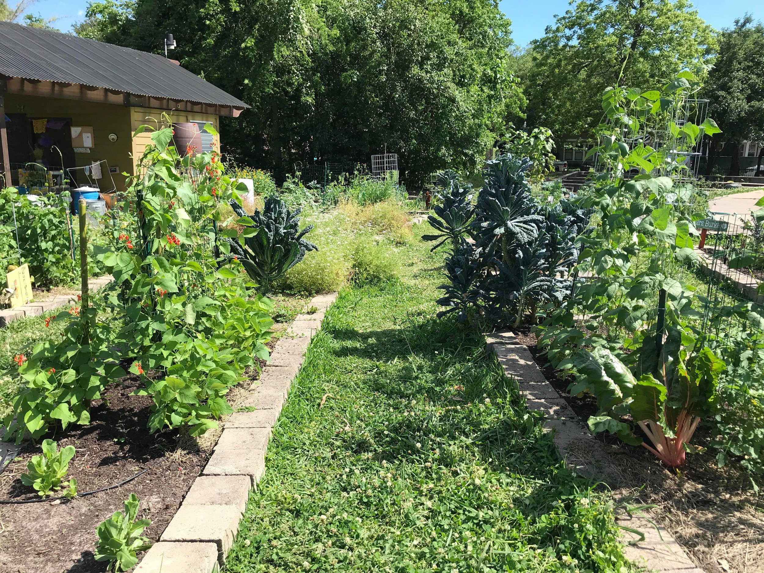 Travis Elementary Garden-12.jpg