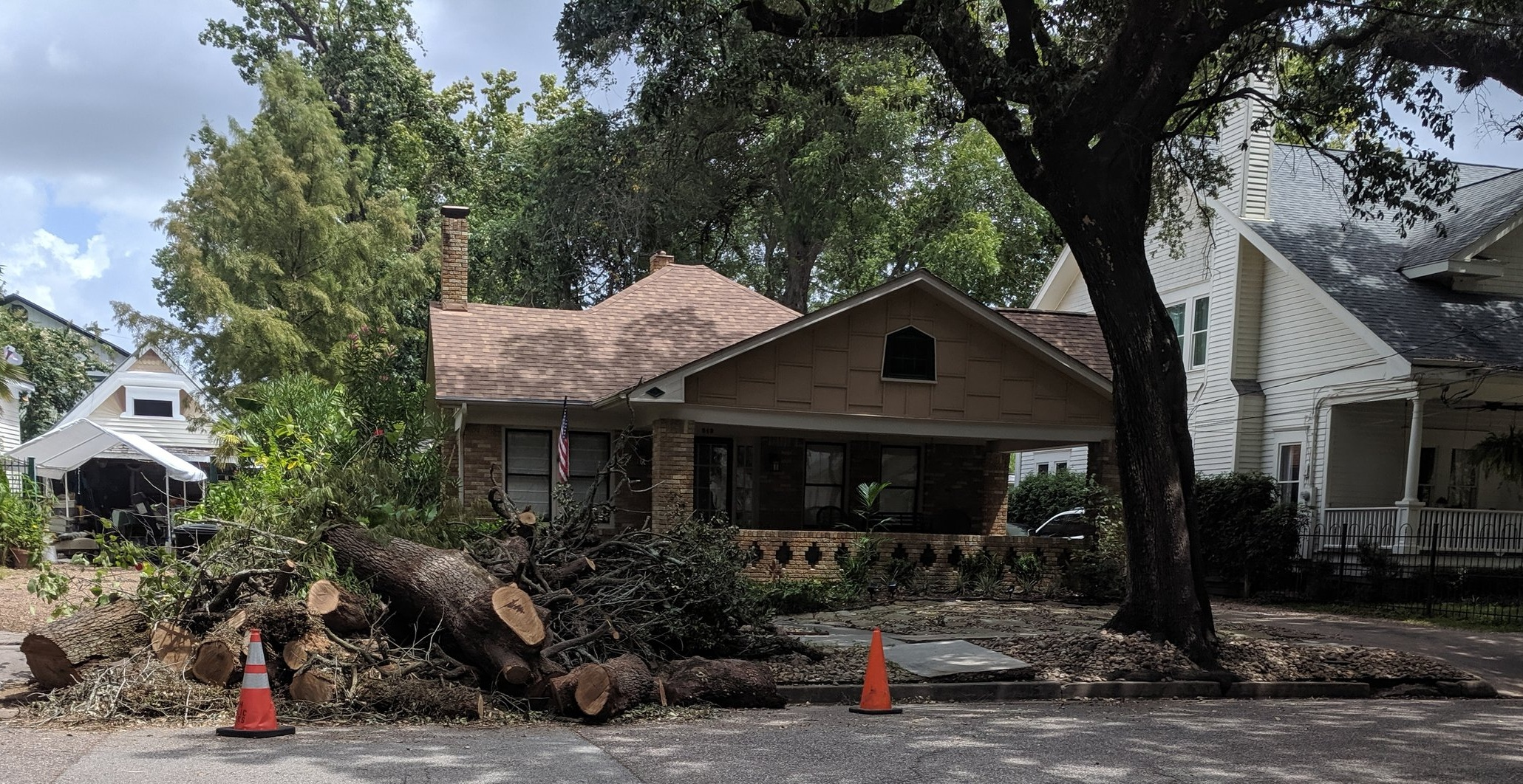 A live oak lost in the 500 block of Bayland Avenue.