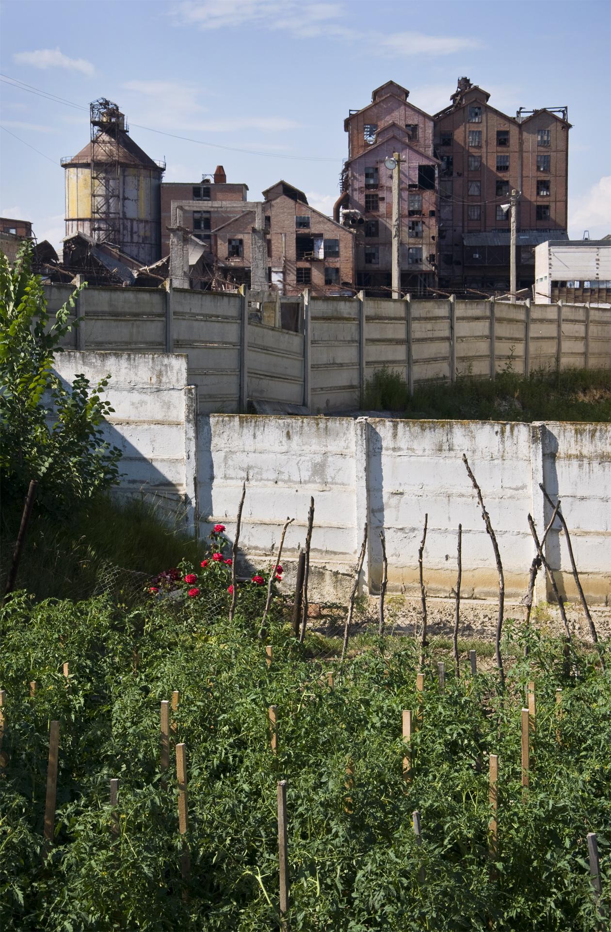 ocna mures_the garden.jpg