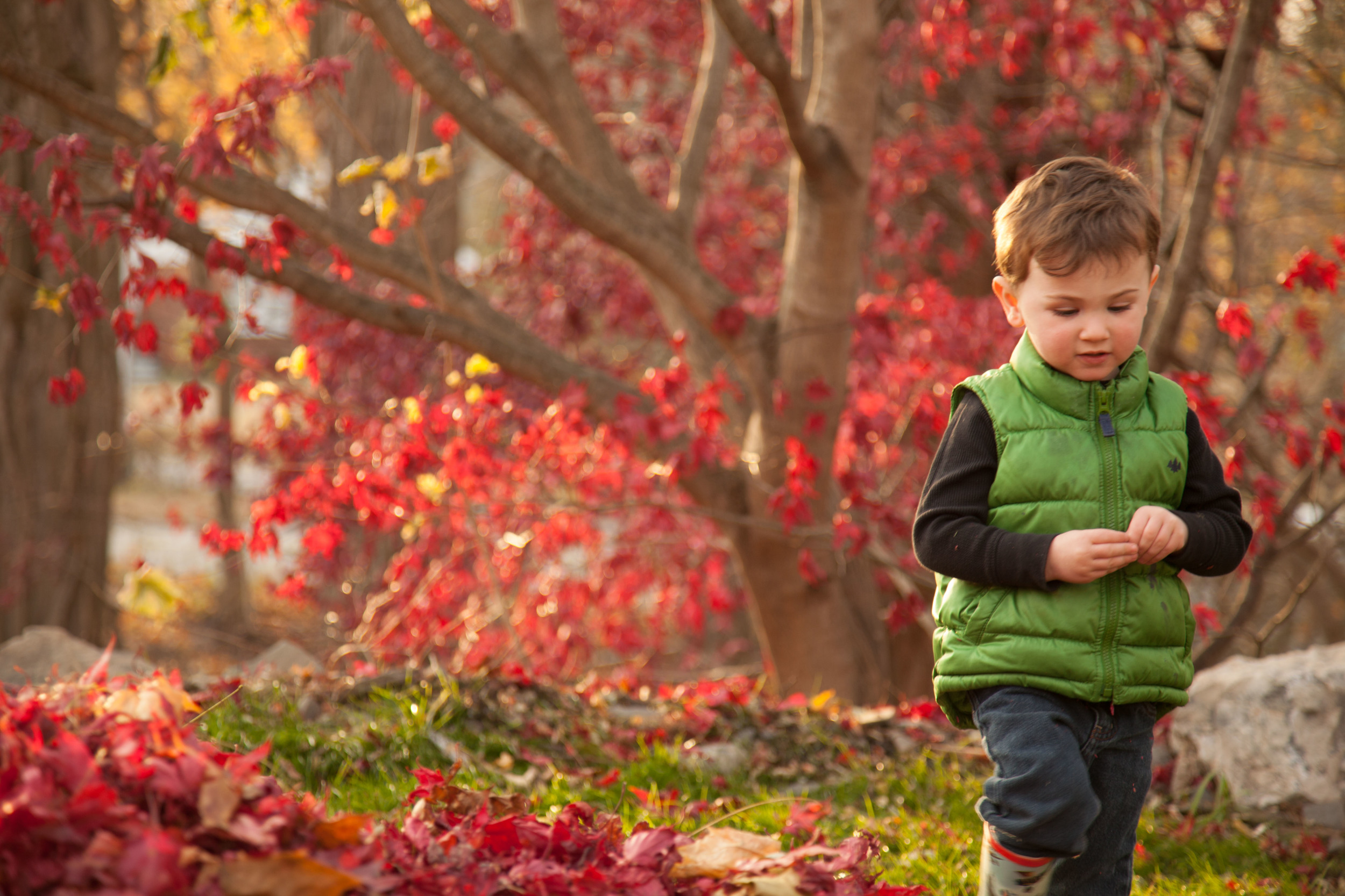 Child walking through the leaves in the fall