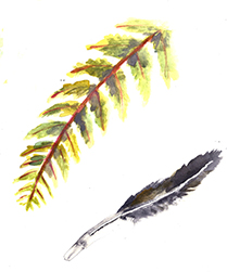 fern and feather_website.jpg