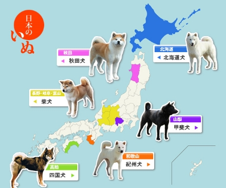 Six Japanese Dogs.  Clockwise from upper right: Hokkaido, Kai, Kishu, Shikoko, Shiba, and Akita. All are named after the region of origin, except the Shiba.  Image from http://obaka.atja.jp/.