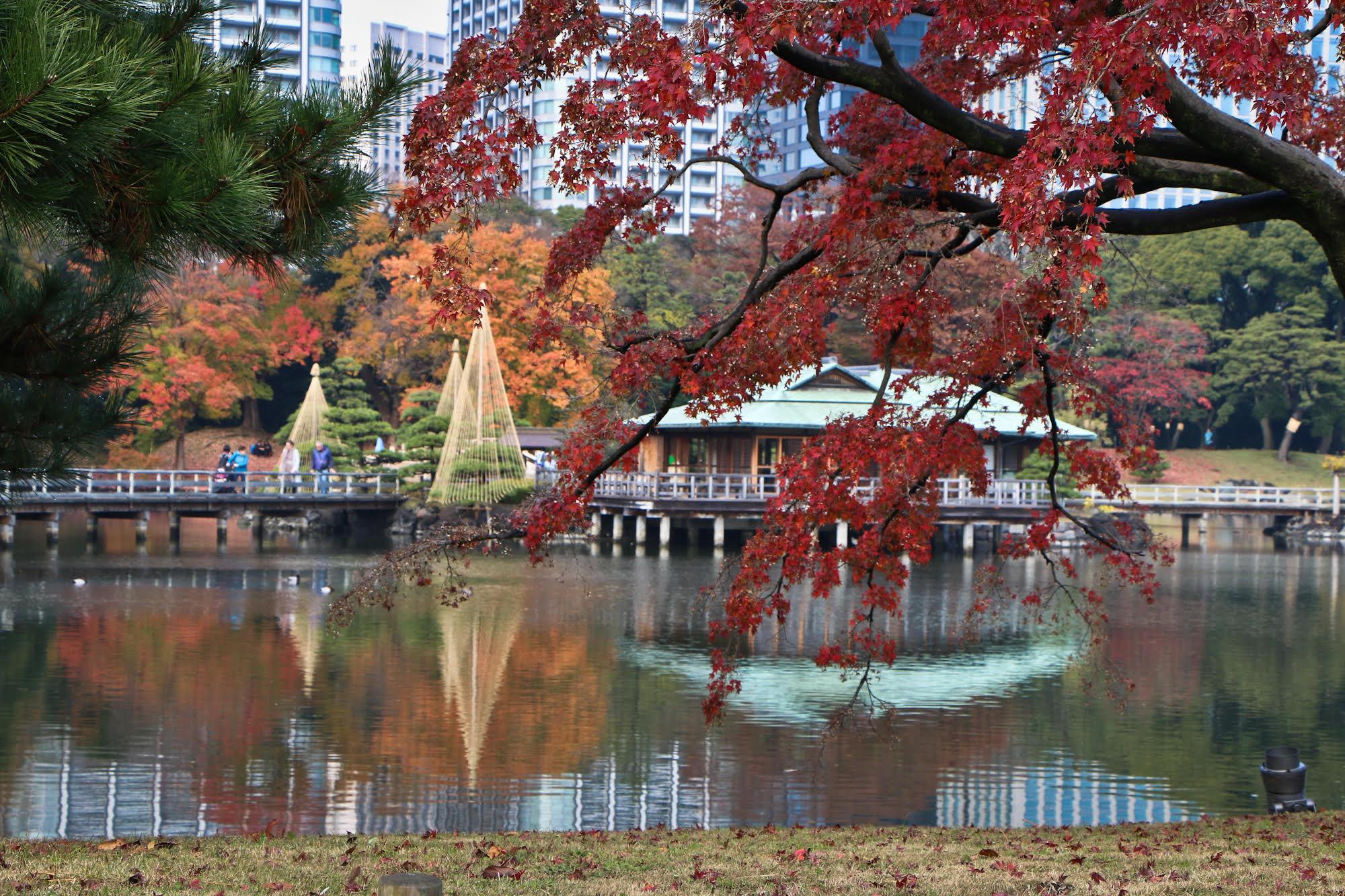 Hama-Rikyu Gardens. This used to be the private Tokyo park of the Tokugawa shoguns.