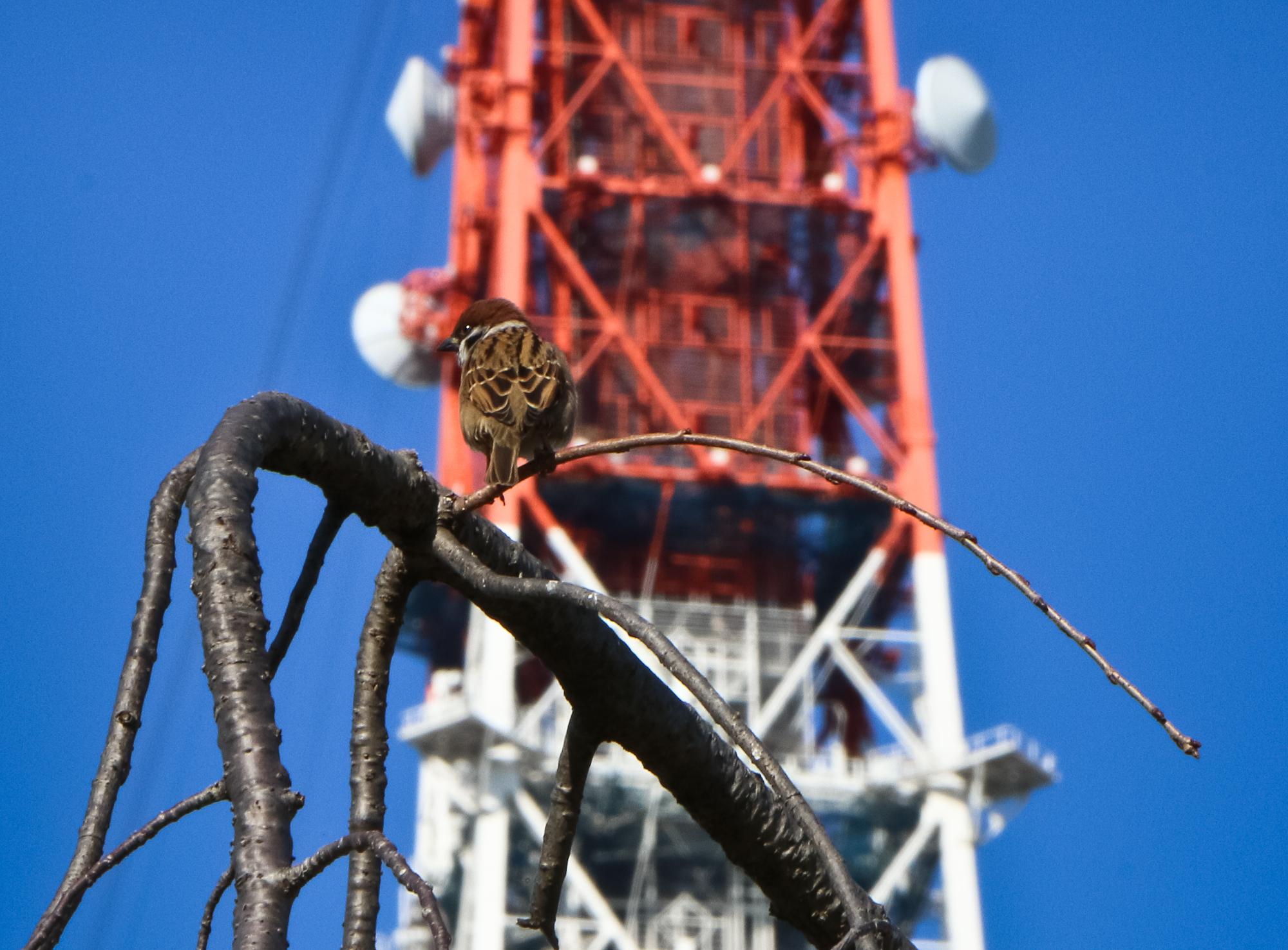 Shibakoen. Tokyo Tower.