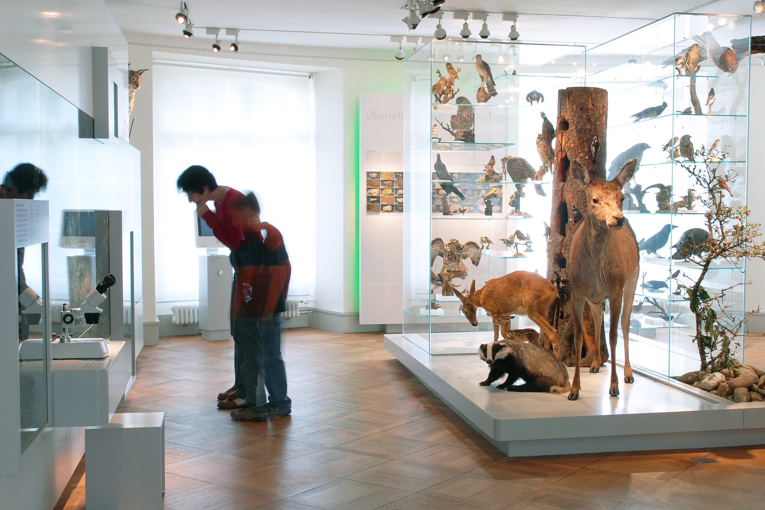 Naturmuseum Thurgau, Frauenfeld