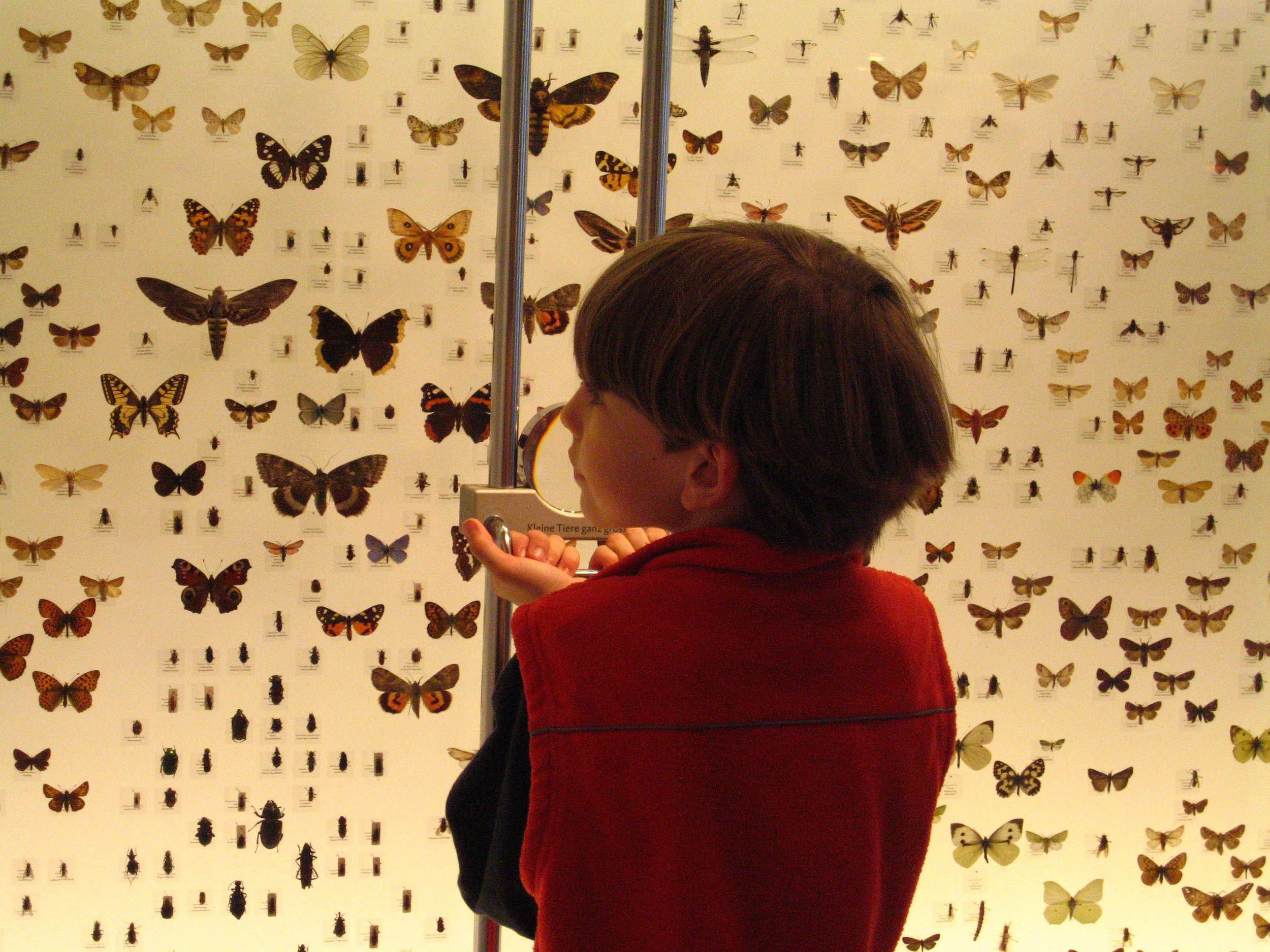 Naturmuseum Thurgau, Schmetterlingssammlung