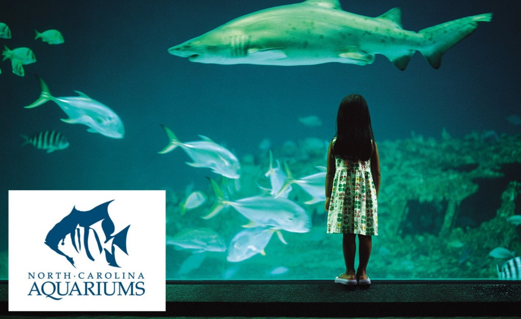MULTIPLE FACILITIES? NO PROBLEM.  The  North Carolina Aquarium  team presented Zoo Advisors with a challenge--could we design a strategic planning process that would involve their entire staff across four aquariums and complete it in a short period of time?
