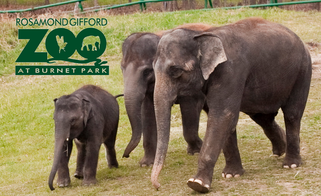 QUALITY AND QUANTITY  In the summer of 2014, Zoo Advisors was engaged by the Friends of the Rosamond Gifford Zoo to conduct a full assessment of their education programming and staffing in an effort to maximize an already strong program.