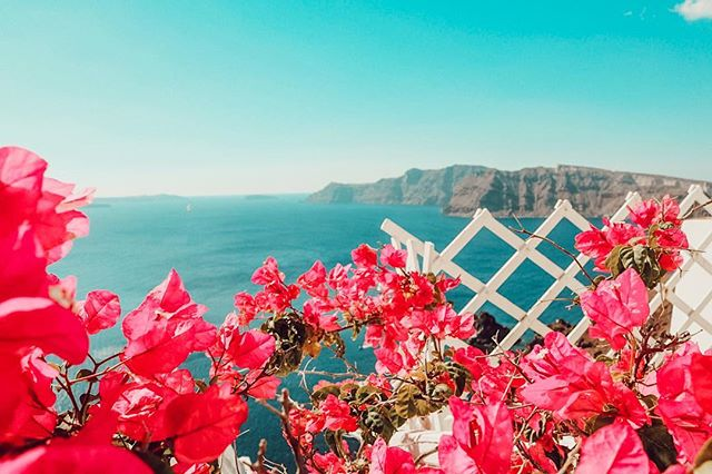 Nothing says Valentines Day like these beautiful flowers in Greece! 🌺 #greece #santorini #flowers #happyvalentinesday