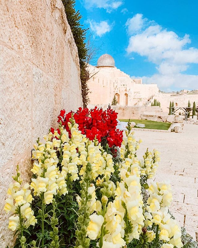 Spring has sprung in Jerusalem! #spring #easteriscoming #eotours #travel #jerusalem