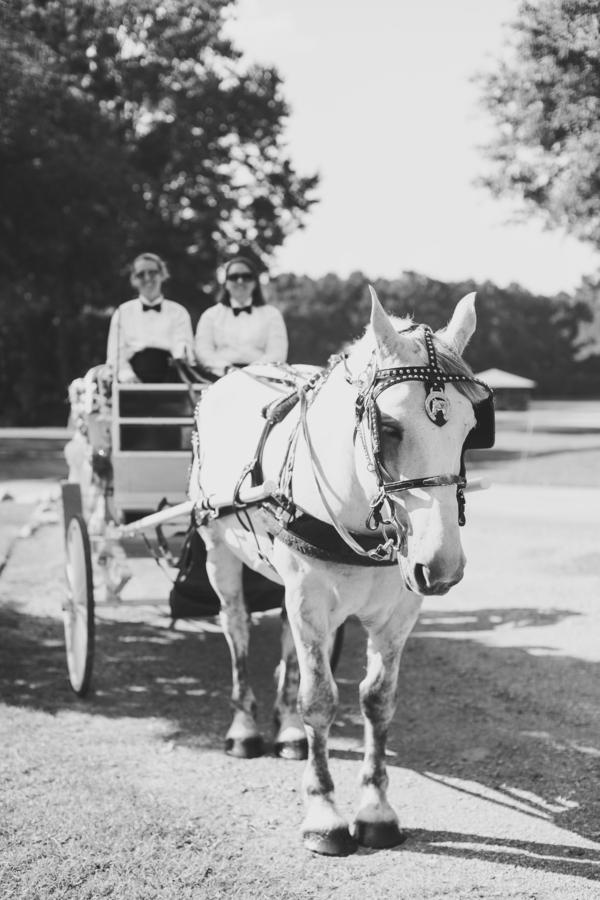 Charleston wedding Horse and Carraige Ride