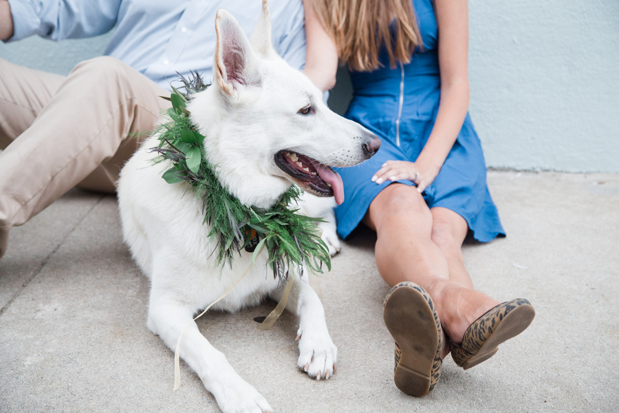 Engagement Session with White German Shepherd