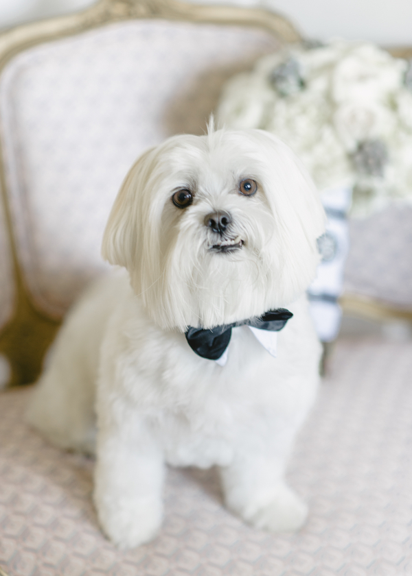 Wedding Pup in a Bow Tie