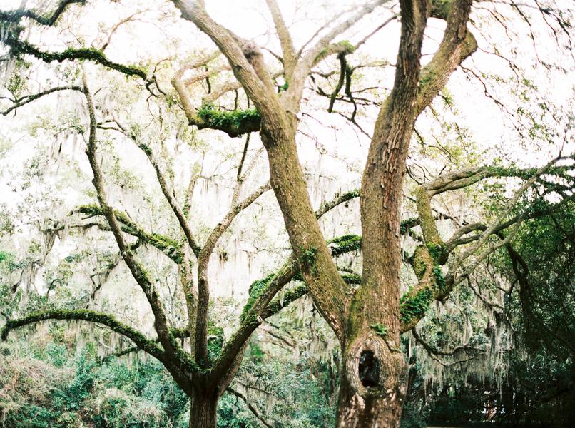 Oak trees and Spanish Moss at Charleston, South Carolina Wedding Venue - McLeod Plantation