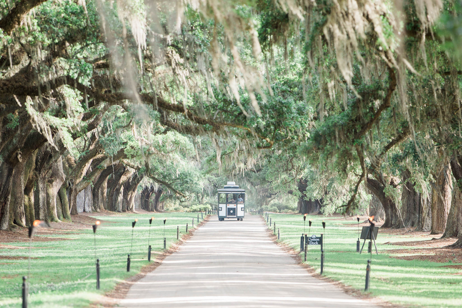 Trolley driving down the Avenue of Oaks