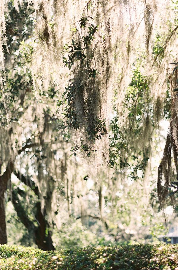 Spanish moss at Oldfield River Club wedding  //  Hilton Head wedding photos by Christi Clark Photography  //  A Lowcountry Wedding Magazine & Blog