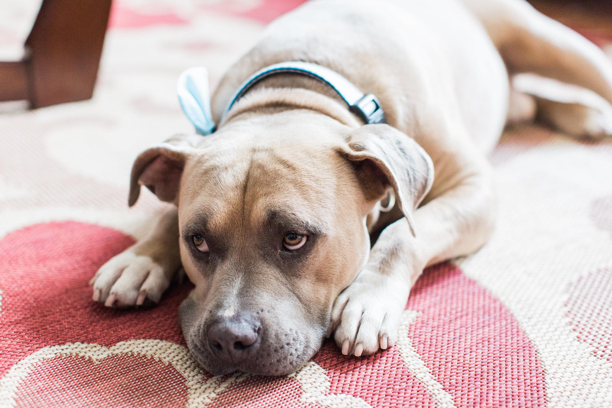 Wedding dog with a bow tie  //  Savannah wedding photos by Apt B Photography  //  A Lowcountry Wedding Magazine
