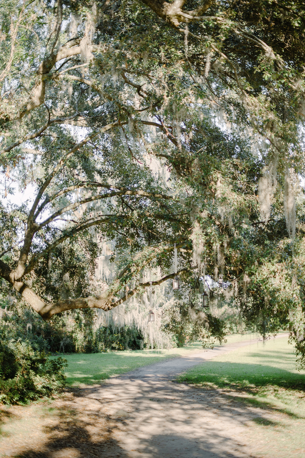 Magnolia Plantation and Gardens in Charleston SC  //  A Lowcountry Wedding Magazine