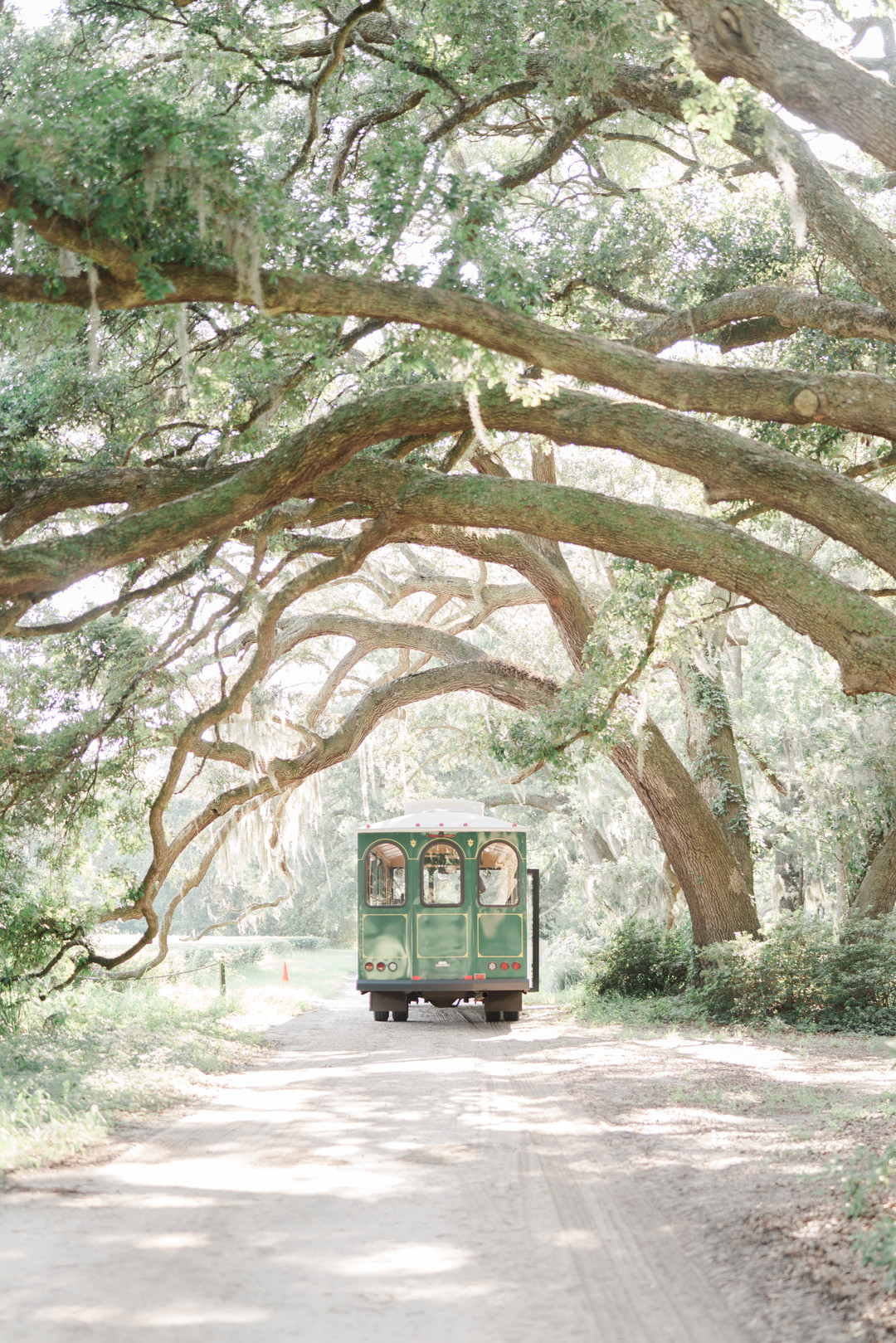 charleston-tea-plantation-wedding-16.jpg