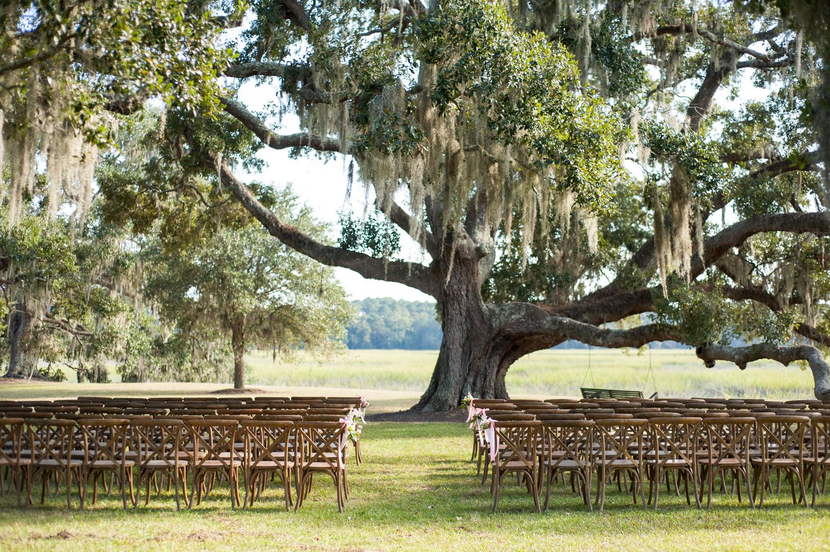 cypress-trees-plantation-wedding-6.jpg