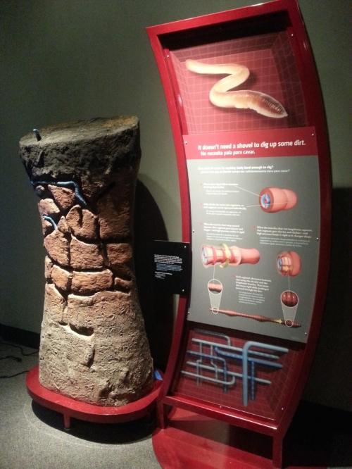 Touchable Giant Worm diorama, Bio Mechanics