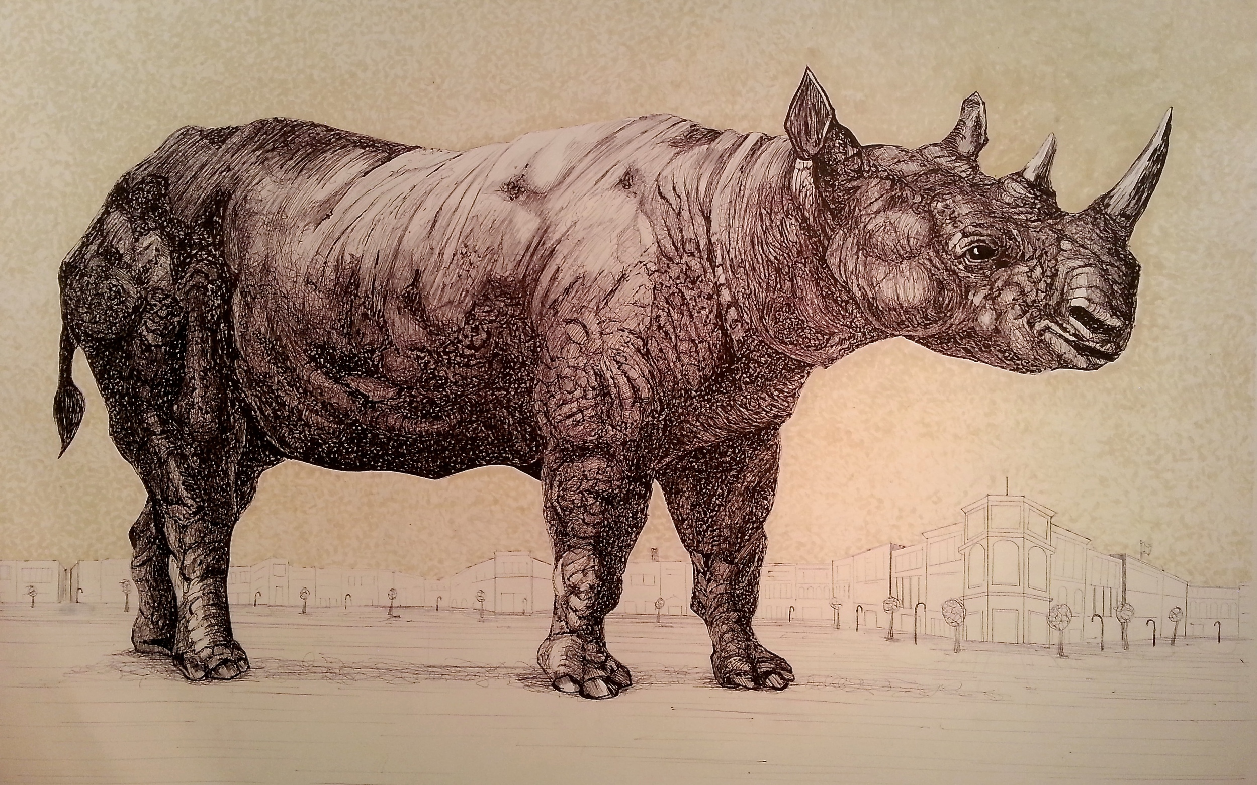 Rhino Drawing.jpg