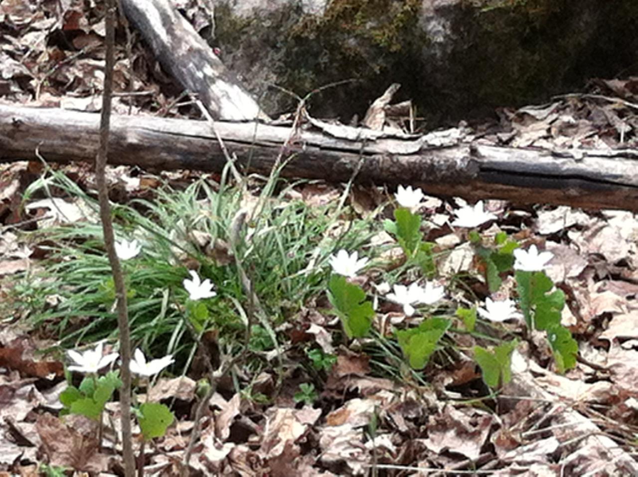 spring wildflowers.jpg